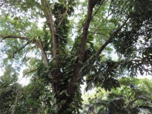 tree_ferns