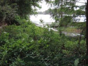 trees_near_swamp